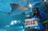 Aqua Celebration at Tokyo