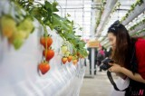 Beijing Holds 7th Int'l Strawberry Symposium