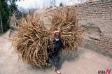"""IMF """"Pakistani Economy Would Speed up"""""""