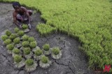 India's 'food security bill' under fire