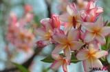Summer flowers in full bloom in Bangladesh