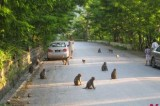 Monkeys are not the terrorists
