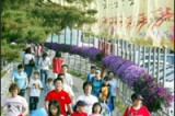 Horse race parks become tourist attraction