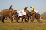 Rare elephants' sports competitions attract over 100,000 spectators in Nepal