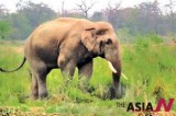 Nepali Gov't officials divided over how to deal with killer elephant