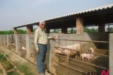 Nepal's former minister is now rearing pigs