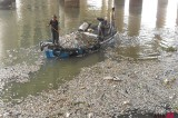 Flood water causes mass mortality of fish at Karachi Harbour