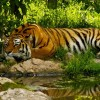 "Call to protect tigers: ""Dhaka Declaration"" recommends actions"