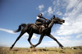 International artists participate in Dubai's horse fair