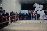 Dubai international horse fair draws global attention
