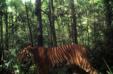 Indonesia uses camera traps to make records of endangered animals