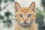 Veneration & Attachment: Cats in Asian Culture