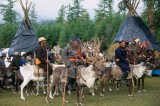 Mongolia to host festival as reindeer population increases