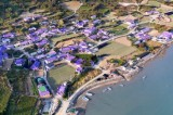"""La Vie en Purple"" transforms Korean islands into perfect attraction in Instagram era"