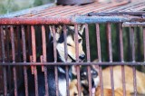 Animal abusers to face fines in Vietnam