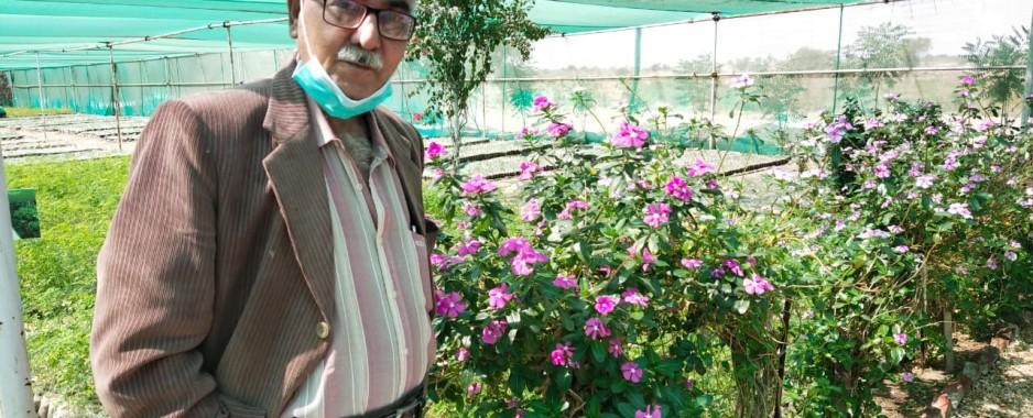 Pakistan: Thar Desert transforming into oasis