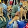16 animals culled at Vietnam's Covid-19 quarantine area