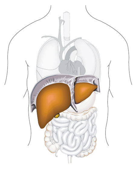 Beware of silent illness in liver