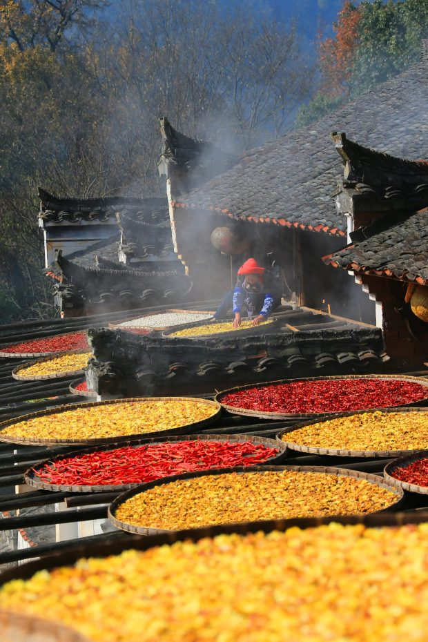 WUYUAN, Dec. 9, 2016 (Xinhua) -- A villager dries harvested crops in the ancient village of Huangling in Wuyuan County, east China's Jiangxi Province, Dec. 8, 2016.  (Xinhua/Shi Guangde) (zwx)