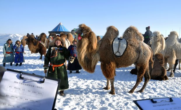 "HULUN BUIR, Dec. 21, 2016 (Xinhua) -- Herdsmen take part in the winter Nadam and camel fair in Ewenki Autonomous Banner, Hulun Buir, north China's Inner Mongolia Autonomous Region, Dec. 20, 2016. The fair, a local traditional festival including camel race, camel ""beauty contest"" and a series of ice and snow events, started in Ewenki on Tuesday. (Xinhua/Han Leng) (wf)"