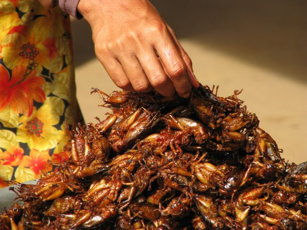 cambodia_08_-_035_-_insects_for_snacks_at_the_market_3198822589
