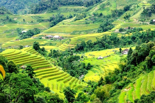 Rice-fields-in-Hoang-Su-Phi