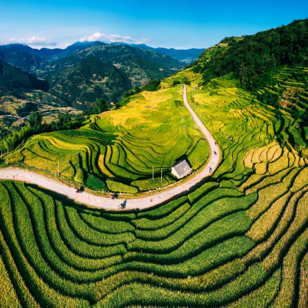 Rice-fields-in-Lao-Cai-