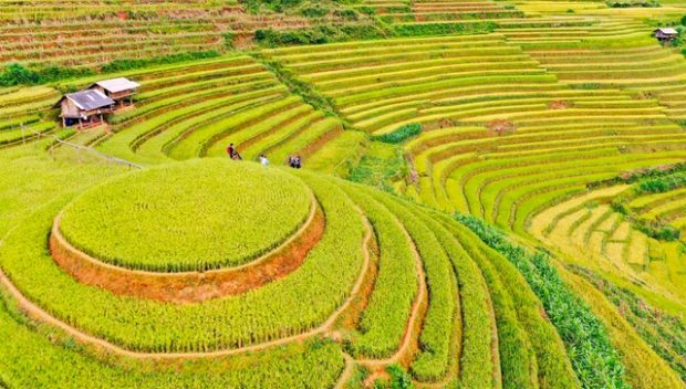 Terraced-rice-fields-in-Mu-Cang-Chai