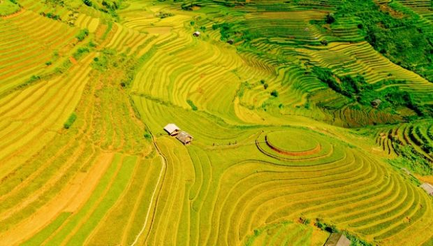 Terraced-rice-fields-in-Mu-Cang-Chai.