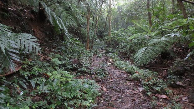 One of the trails of Mt. Makiling. Image credit: Andrew Martin (CC BY 3.0).