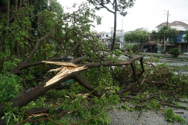 trees fell on a street in Danang City. Photo by Dantri