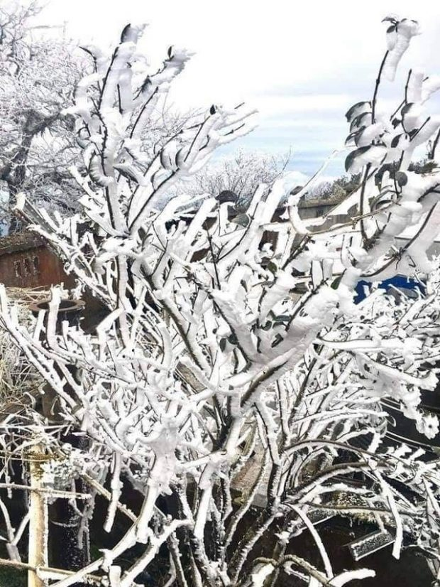 Trees-covered-in-frost-in-Son-La-Province