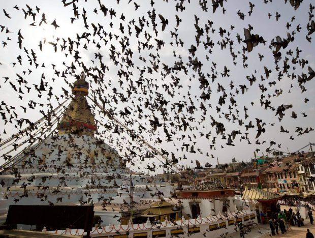 During the chockling Rinpoche funeral, a flock flocks around the Kathmandu Swayambhunath temple (Photo by Pemba Sherpa)