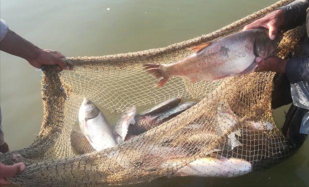 Gorano Reservoir fish catch