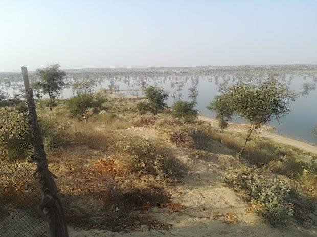 Plantation at Gorano Reservoir