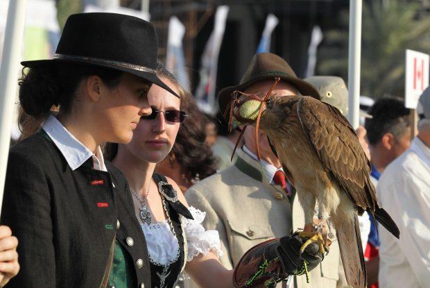 falconry-3